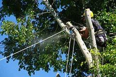 山林の樹木伐採作業