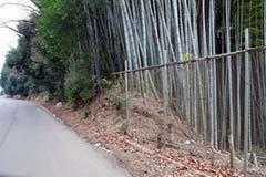 竹藪・竹林伐採