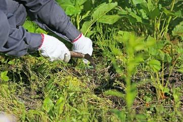 お庭の除草・草抜き・草むしり・草とり作業