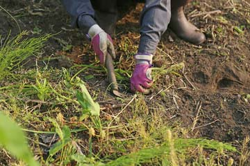 草抜き 草取り作業