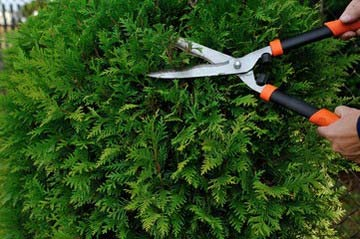 庭木 植木の剪定