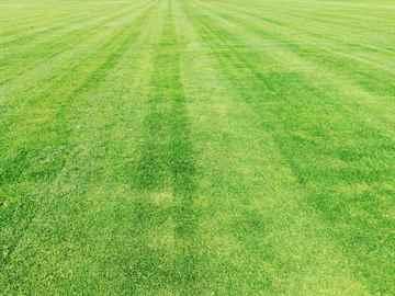 定期芝生の刈り込み、芝刈り